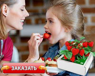 Чудо ягодница купить