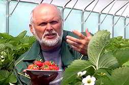 Домашняя ягодница производится по стандартам