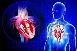 Алкопрост восстанавливает поврежденные органы