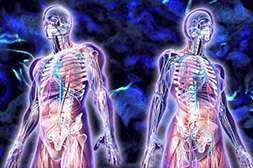 Благодаря Diagen происходит регенерация организма.