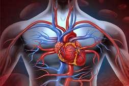 Testosterone+ снижает риск ишемической болезни.