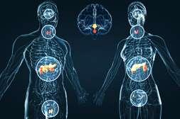 Со средством Leptigen Meridian Diet нормализуется гормональный фон.